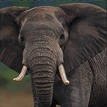 Elephant by Danny Day