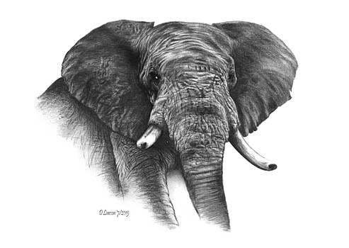 Elephant by Dave Lawson