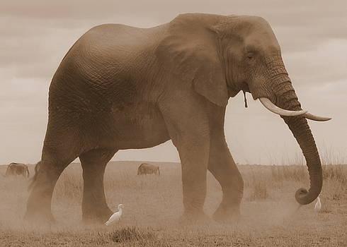 Elephant Dust by David Olson