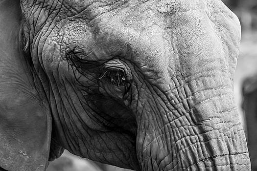 Elephant Eye by Sydney Manuel