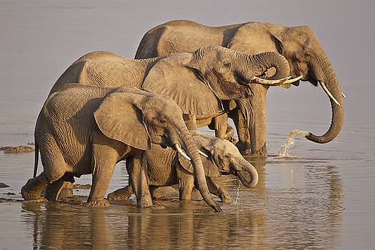 Elephant family by Johan Elzenga