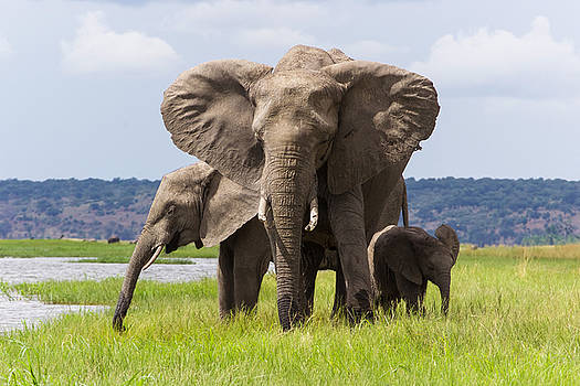 Elephant Family  by Joscelyn Paine