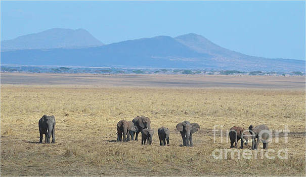 Elephant Family Scenic Backdrop Tanzania by Tom Wurl