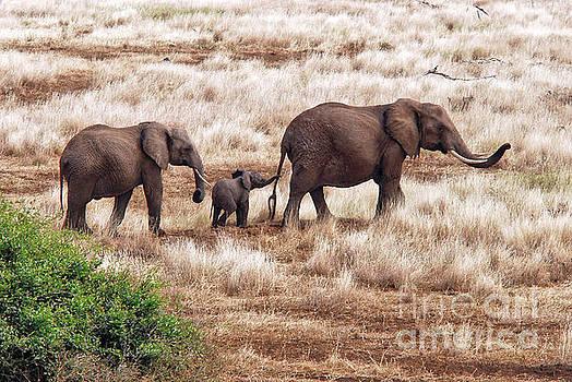 Robert Abramson - Elephant Family, Tanzania