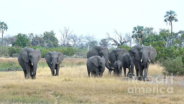 Elephant Family Tom Wurl by Tom Wurl