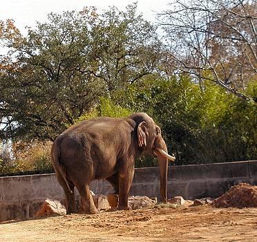 Elephant Friend by Camera Candy