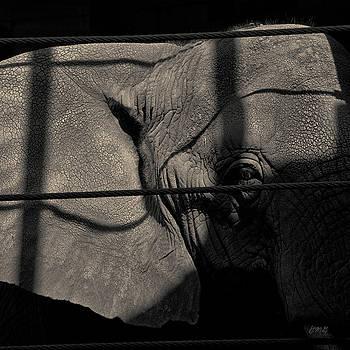 David Gordon - Elephant I Toned SQ