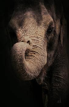 Elephant by Jim Vance