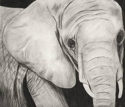 Elephant by Joanna Aud