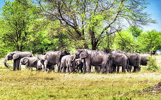 Elephant Love by Robin Zygelman