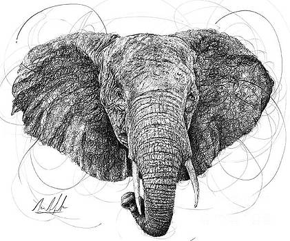 Elephant by Michael Volpicelli