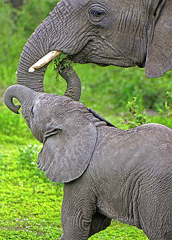 Dennis Cox WorldViews - Elephant Mom and Baby