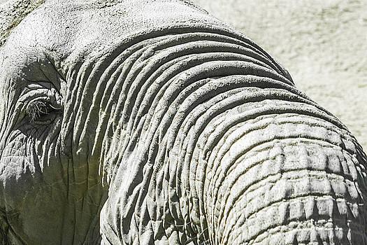 Elephant Portrait Close Up by Kimberly Blom-Roemer