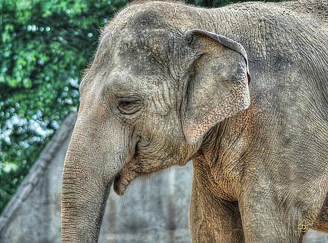 Sam Davis Johnson - Elephant