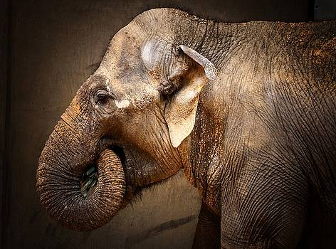 Elephant by Scott Fracasso