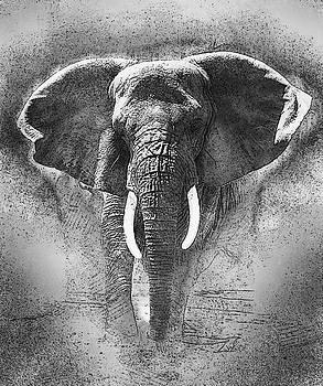Elephant Sketch B/W by Jack Zulli