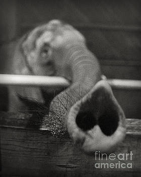 Elephant Trunk by Martin Konopacki
