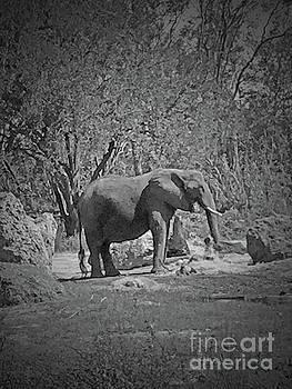 Jost Houk - Elephant Tusk