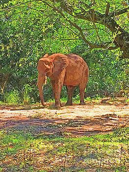 Jost Houk - Elephant Walk