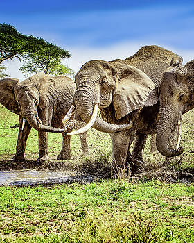 Mud Play by Janis Knight