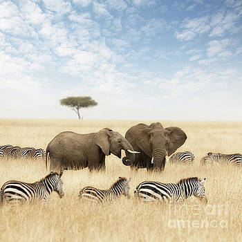 Elephants and zebras in the grasslands of the Masai Mara by Jane Rix