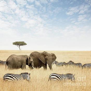 Elephants and zebras in the Masai Mara by Jane Rix