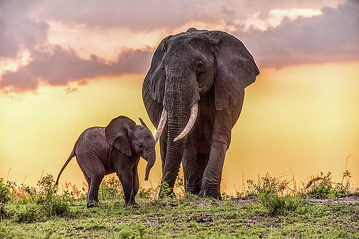 Elephants at Sunset by Janis Knight