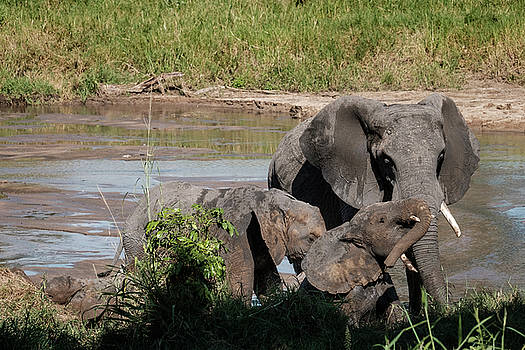 Elephants at the River by Mary Lee Dereske