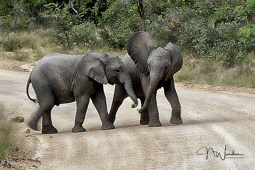 Elephants Childs Play by Norma Warden