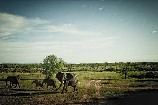Elephants crossing by Justin Carrasquillo