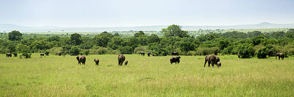 Elephants on the Savannah by David Morefield