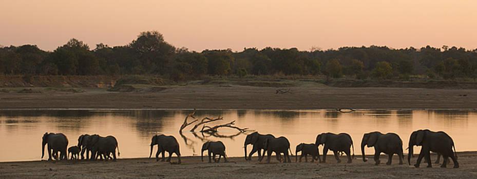 Elephants panorama by Johan Elzenga