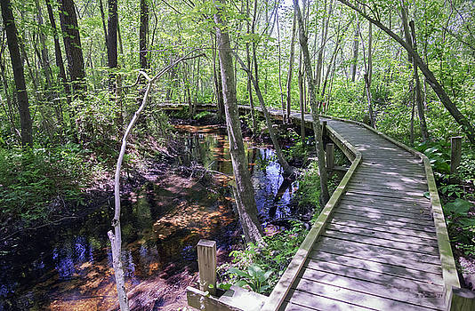 Elevated Nature Trail by Brian Wallace