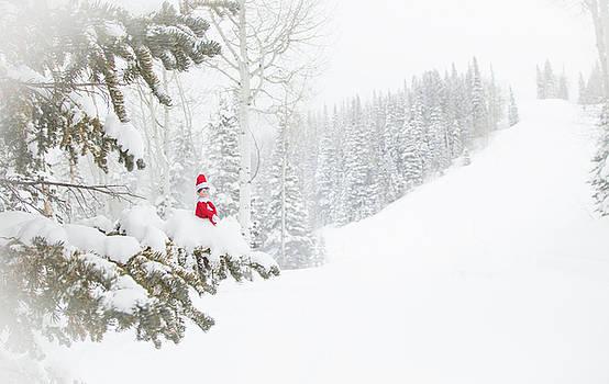 Elf on the Pine by Sean Allen