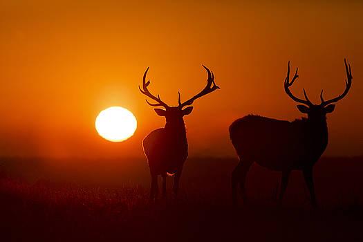 Scott Bean - Elk and Sunrise