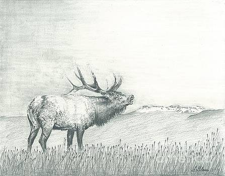 Elk and The Flattops by Sarah Bevard