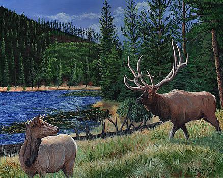Elk at Beaver Lake  Yellowstone by Timithy L Gordon