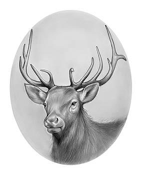 Greg Joens - Elk