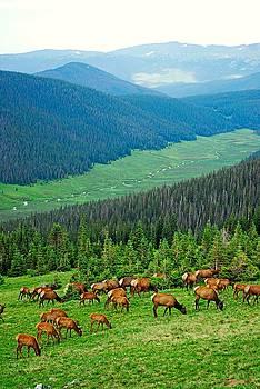 Robert Meyers-Lussier - Elk Highlands