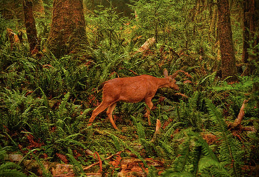 Elk In The Rain Forest 002 by George Bostian