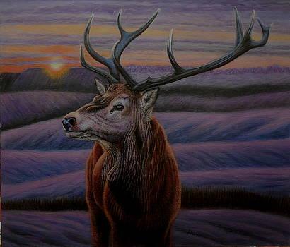 Elk in Winter  by Karen Sharp