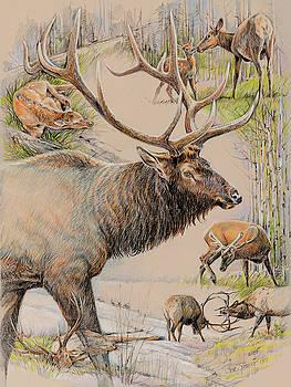 Elk Lifescape by Steve Spencer