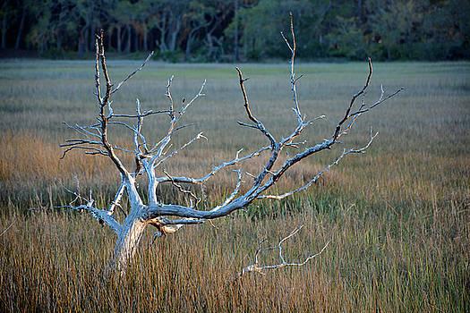 Elk-like Tree on Jekyll Island by Bruce Gourley