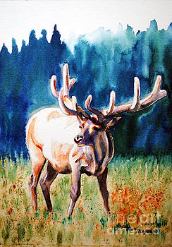Elk by Tracy Rose Moyers