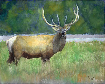 Elk Watercolor by Mary Jo Zorad