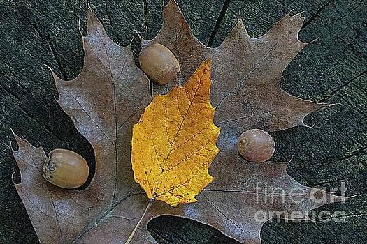 Elm on oak by Jim Wright