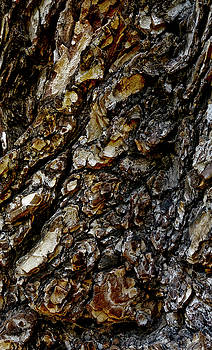 Frank Tschakert - Elm Tree Bark Pattern