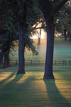 Joy Bradley - Elmwood Park