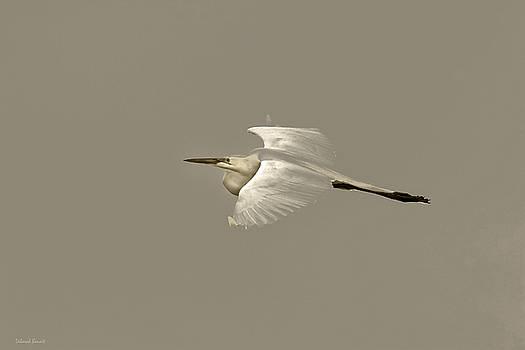 Deborah Benoit - Elusive Giant Egret