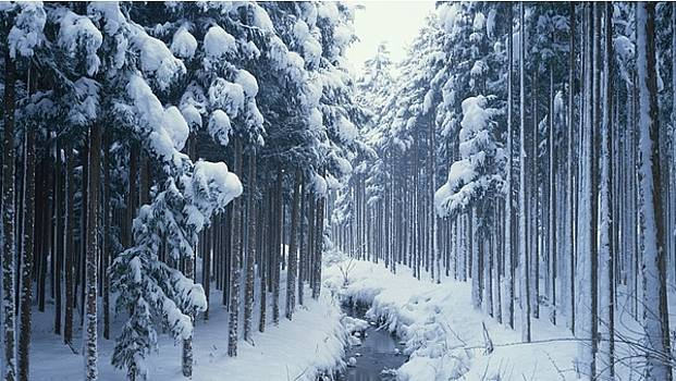 Elvin Siew Chun Wai - Forest covered in snow by Elvin Siew Chun Wai